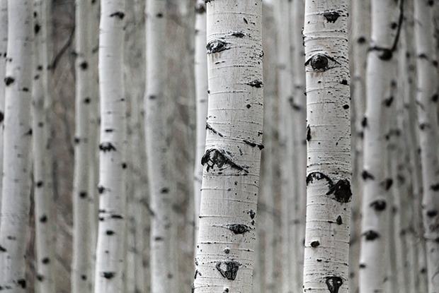 Как посадить дерево у себя во дворе и не получить штраф — Iнструкцыя на The Village Беларусь