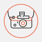 В Минске пройдет чемпионат по фотографированию птиц