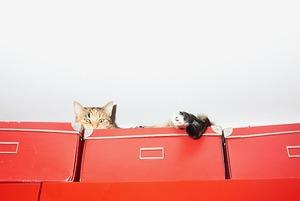 Сильная и независимая кошатница: минчанки, которые живут с десятком котов