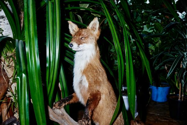 «О крови и грязи я не думаю»: как работают создатели упоротых лис