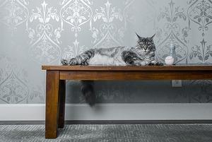 «Без детей и животных»: выясняем, легко ли снять квартиру в Минске, если у тебя младенец и кот