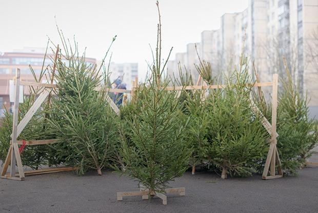 Могло быть и хуже: Что можно купить на елочных базарах в Минске