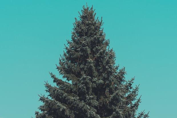 Как будут выглядеть главные новогодние елки в Минске — Навiны на The Village Беларусь