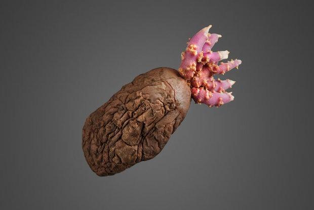 Креативное агентство создало для девайсов обои с картошкой