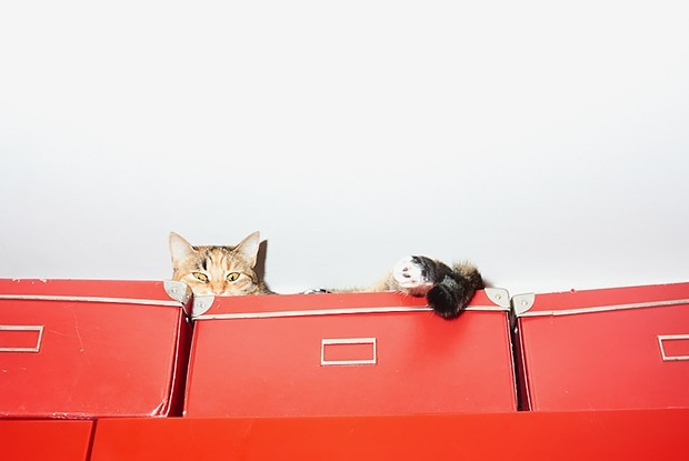 Сильная и независимая кошатница: минчанки, которые живут с десятком котов — Людзi ў горадзе на The Village Беларусь