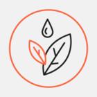 Зачем деревья в Чижовке «одели» в сетку
