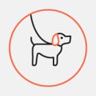 Посмотрите на собаку, которая стала талисманом авиационного фестиваля