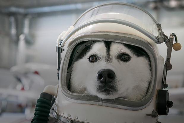 «Погладил, от сердца отлегло, и пошел дальше работать»: Минчане, которые ходят с собакой на работу