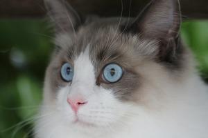 Старший мяучный сотрудник: Где и кем работают минские коты