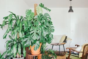 Как быстро вырастить дома красивые растения