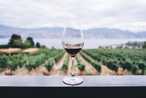 А судьи кто?: Топ-10 беларусов, которые оценивают и комментируют вино в знаменитом приложении Vivino