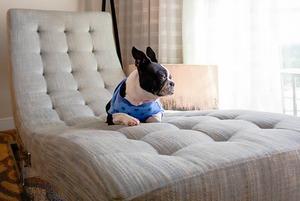 «Мэблю IKEA сабакі не асабліва любяць грызці»: Як падрыхтаваць кватэру для жыцця з жывёламі