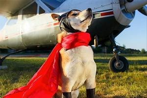 Посмотрите на милейших собак-финалистов, которые могут стать талисманом авиационного фестиваля