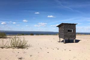 «Чисто наша Балтика на минималках»: 5 диких пляжей Беларуси, о которых вы могли не знать
