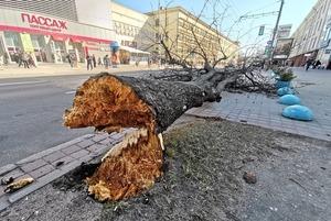 Как выглядят последствия сильного ветра в Минске
