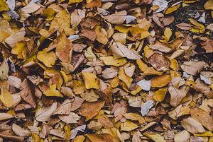 Чем вредны опавшие листья и куда их увозят?